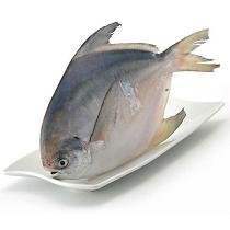 金君金鲳鱼 400g/袋